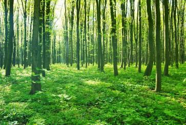 Fotomural bosque verde