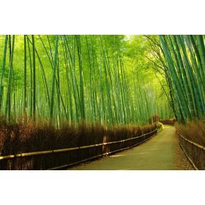 Fotomural bosque de bambú