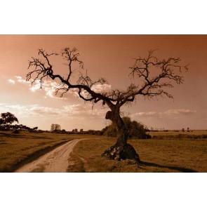 Fotomural El Árbol del Recuerdo