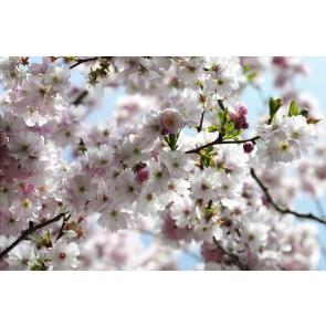 Fotomural Spring