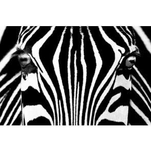 Mini Mural Zebra