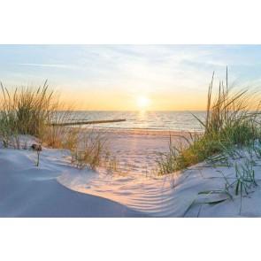 Fotomural Dunaen la playa alatardecer