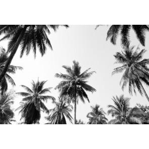 Fotomural Palmerastropicales