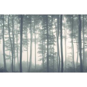 Fotomural Bosque y niebla