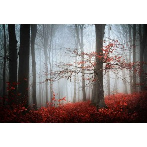 Fotomural bosque embrujado