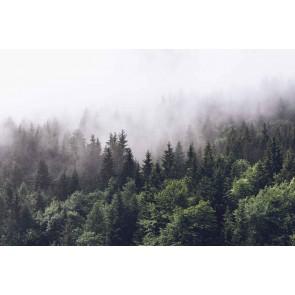 Fotomural Árboles en la niebla