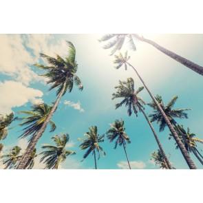 Fotomural Palmeras en la playa